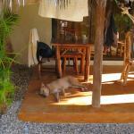 Amber , la chienne de garde sur notre terrasse