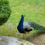 Jardin à la française de la Villa Arnaga : un hôte du jardin