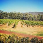 Forest Hill Vineyard