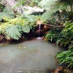 Water garden cottage