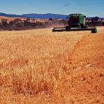 Our barley being harvested to make our whisky