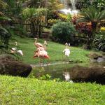 Jardin botanique de Coluche