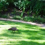 Ibis in the hotel's garden
