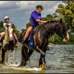 C Ponies Beach Horses