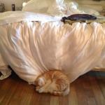 Fushi beim Mittagsschlaf
