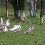Ward Lake fauna