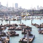 Spend the day at PIER 39 and visit the hundreds of sea lions that call this place home.