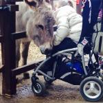 Ginny the donkey is fantastic with everyone