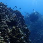 Diving at Sail Rock