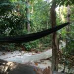 Photo of Jack's Jungle
