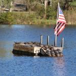 Turtles sunning on the dock!