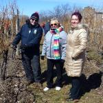 Pruning Strewn's Vines