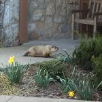 Foto de Pennyrile Forest State Resort Lodge