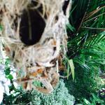 A nest we saw at the villa