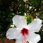 Blumen am Pool