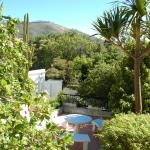 Blick vom Pool in den Garten