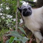 One of the resident monkeys
