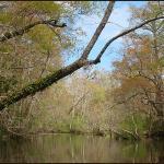 Wambaw Creek Wilderness Canoe Trail
