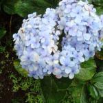 """Parte de la flora """" Mil Flores"""" se llama"""