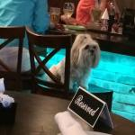 Dog at the bar, maybe waiting to order a bowl of water.