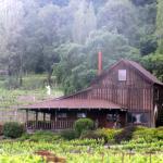 Mill Creek Vineyards and Winery, Healdsburg, Ca
