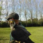 Demonstração de aves de rapina