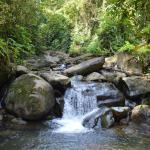 Foto de Rambala Jungle Lodge