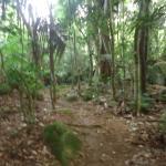 trilha para cachoeira