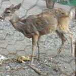 Paseo y Reserva Animal Del Rio Orizaba