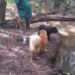 Our dogs at the river. The black dog on leash is blind.