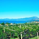 Vigneti Lago di Garda