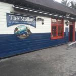 The mallard