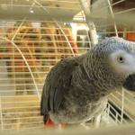 В Отеле в Холле живет такой вот чудесный попугайчик, любит, когда его чешут за шейкой :)