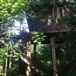 Foto de Thick Forest