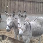 The Flicka Foundation - Horse and Donkey Sanctuary
