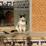 Foto de Riad d'Or Meknes Medina