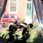 Beautiful windows with charming views