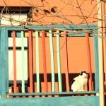 The Shaffer Hotel guard cat
