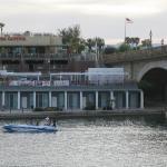 Javelina at London Bridge