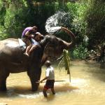 Visiting elephants in their habitat