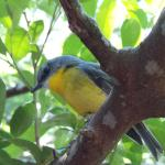 this is one of the beautiful birds in the National Park