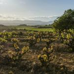 Our vineyards / Nuestros viñedos
