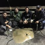 huge stingray caught on bob hall pier