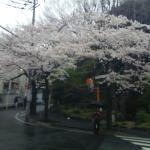 Foto de Meguro Gajoen