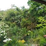 Foto de Coconut Lodge