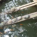 Las Tortugas!