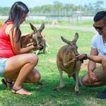 Feeding the friendly Kanagroos at Oakvale Farm