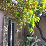 The bitter orange tree in the garden
