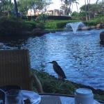 Cafe Kiowai의 사진