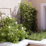 Vu jardin